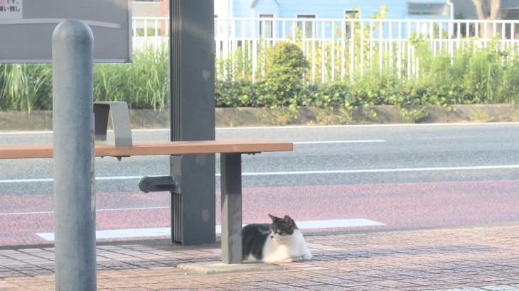 ネコ永谷?この街でもっとも猫がくつろぐ場所があった!
