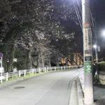 戸塚の桜坂?税務署周辺は近隣住民を癒す桜スポットだった