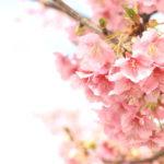 ひとあし早く桜を愛でよう。第8回平戸永谷川さくらまつり