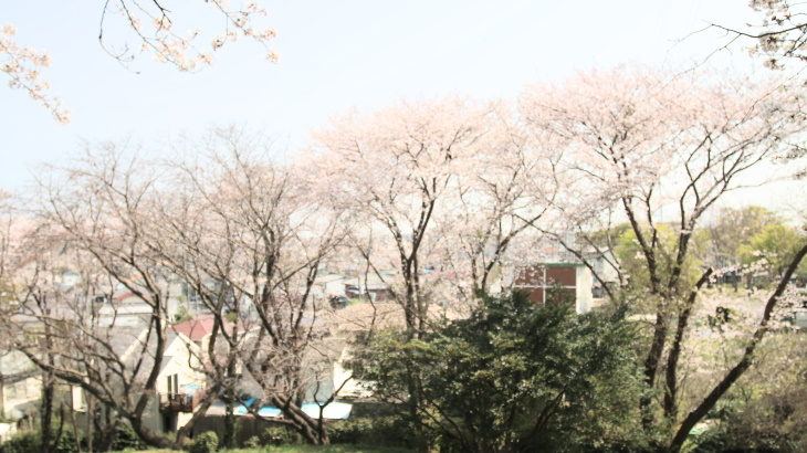 下永谷の最強花見スポット。「下永谷市民の森」散歩のススメ