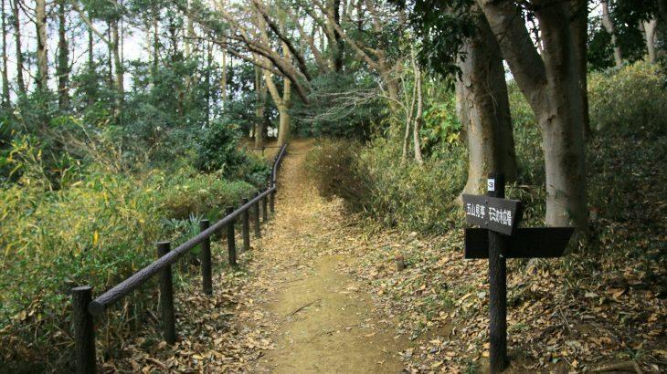 この街の秘境!森林浴と景色が楽しめる下永谷市民の森のススメ